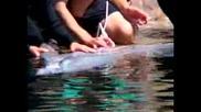 Ултразвук на делфин