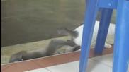 Маймунка се опитва да целуне коте!