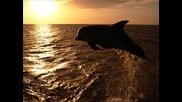Медитация със звуци от делфини
