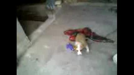 Едно Малко Кученце