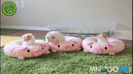 Малки,сладки котенца