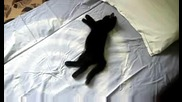 л - черно коте 3.08.2009 Dsci0021