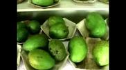 Фестивал на мангото в Индия