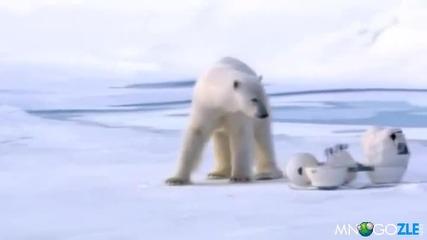 Полярните мечки мразят камери