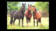Владето - Чичовите конье