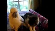 Папагал гали котка