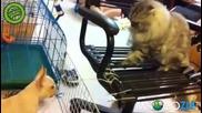 Смях! Коте налага малко догче