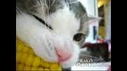 Малко Котенце Яде Царевица