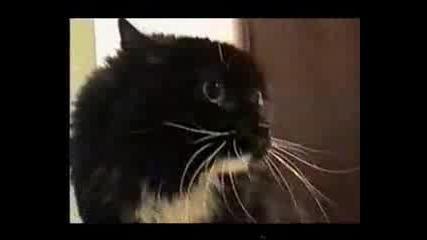 Смях котки говорят