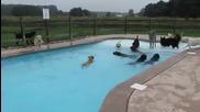 Вижте как кучета умело плуват в басейн!