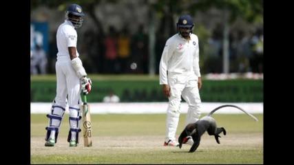 Маймуна забави мач по крикет