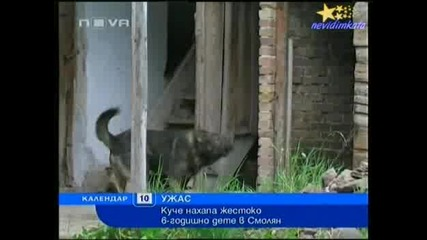 Ужас - Куче Разкъсва Части От Главата И Уш