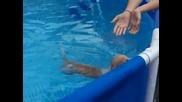 Чихуахуа,което плува