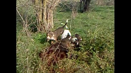 lov v karakuz