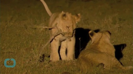 Jimmy Kimmel Chokes Up Discussing Cecil the Lion