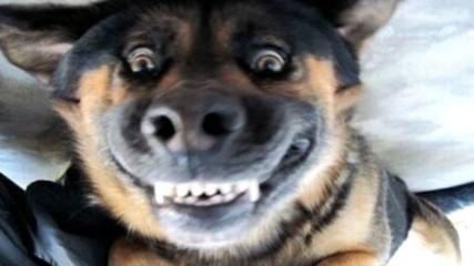Най-смешните породи кучета! Клепоухи и голи, те станаха скандално популярни