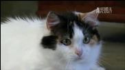 Котки 101: Мънчкин