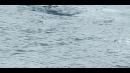 Странното плаващо животно в Исландия