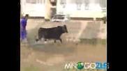 Подивял бик на село