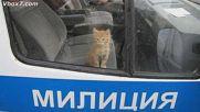 Бисери от полицейски - милиционерски протоколи в България