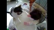 Коте вкарва серия тупалки