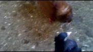 Паламарски -кубрат