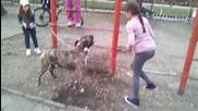 Най лошото куче Пит Була