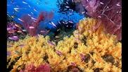 красотата на подводния свят