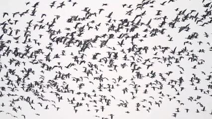 Мери Бойс Бенд - Да надбягам птиците