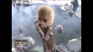 ! Шоуто На Маймунките
