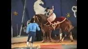 akrobatika na kone Slavovi - cirk Korona - 1992 g.