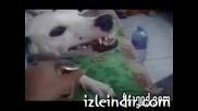 Най - стиснатото куче на света! (смях)