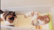 Котка говори на малките си