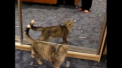 Котка напада огледало