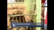 Дамбовеца оправдан за тигрите