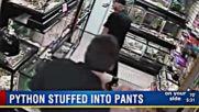 Мъж се опита да открадне питон, като го напъха в гащите си
