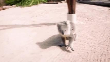 Сладко бебе коала заменя дървото с човек