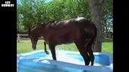 Кон се забавлява в плувен басейн.