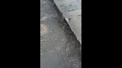 Младо момиче спасява малко котенце от канализацията