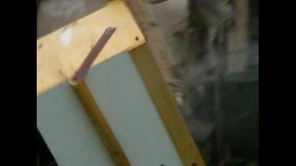 Изтръскване на пчелите2