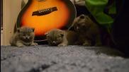 Три котенца заспиват по едно и също време .. Сладури ..