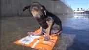 Трогателната история на трикрако куче