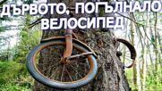 Дървото, погълнало велосипед