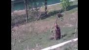 Мечка спасява мечето си