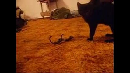 Смело Котенце Си Играе Със Скорпиони :)