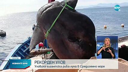 Рибари попаднаха на рекордно голяма риба в Средиземно море