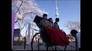 Цветна вишнева феерия радва Япония