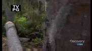 Човекът срещу природата - Сезон 5 епизод 2(част 2)