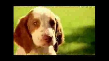 Реклама - Малки Кученца