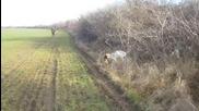 лов на фазани